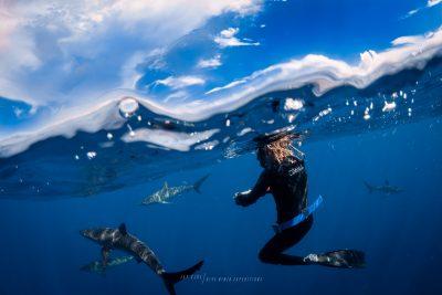 shark diving PADI IDC Cabo San Lucas Mexico